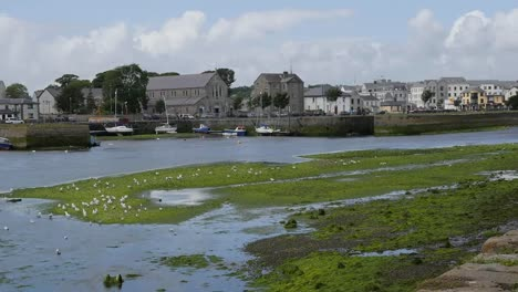 Ireland-Galway-City-Sea-Gulls-Perch-On-A-Tidal-Stream