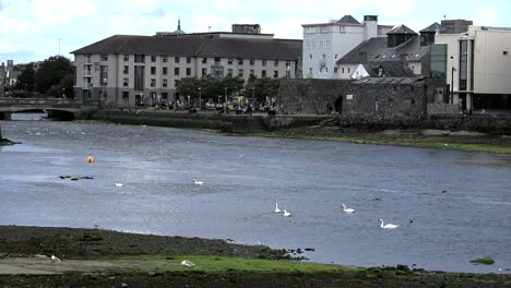 Ireland-Galway-City-Birds-On-The-Bay