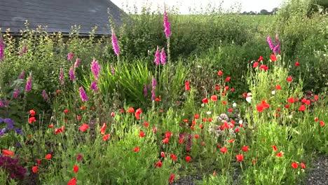 Ireland-West-Cork-Cottage-Garden