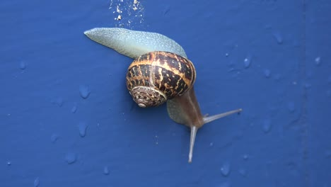 Ireland-Snail-Crawling-Down-Blue-Door