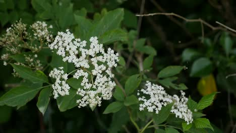Ireland-Two-Flowers-Of-Queen-Anne-s-Lace