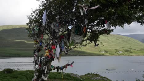 Ireland-West-Coast-Rag-Tree