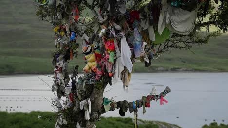 Ireland-West-Coast-Tree-With-Rags