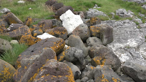 Northern-Ireland-Antrim-Rocks-With-Lichens