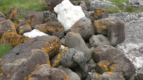 Northern-Ireland-Antrim-Zooms-On-Lichens-On-Rocks