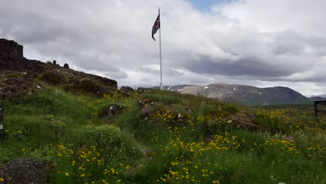 Iceland-Pingvellir-Flowers-With-Flag