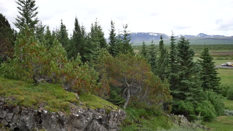 Iceland-Pingvellir-Trees-On-Slope