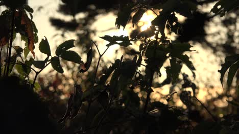 Nature-Leaves-Come-Into-Focus-And-Evening-Color