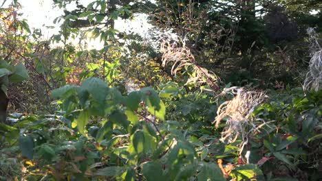 Nature-Sun-Glimmers-Through-Weeds