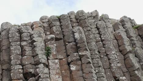 Northern-Ireland-Giants-Causeway-Plant-In-Column-Crack-