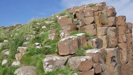 Northern-Ireland-Basalt-Columns-With-Vegetation-At-Giants-Causeway-