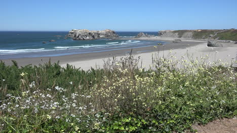Oregon-Bandon-Curved-Beach-And-Flowers