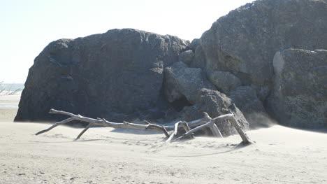 Oregon-A-Man-Walks-By-Driftwood