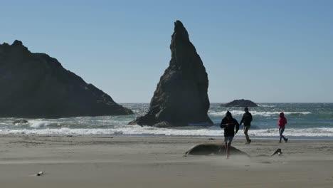 Oregon-Boy-Runs-From-Dead-Seal