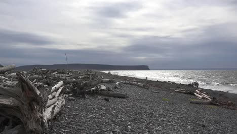 Canada-Bay-Of-Fundy-Driftwood-On-Pebble-Beach