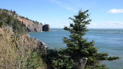 Canada-Bay-Of-Fundy-Tree-And-View