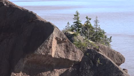 Canada-Bay-Of-Fundy-Trees-And-Rocks