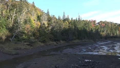 Canada-Halls-Harbour-Reservoir-Sun-On-Trees-Low-Tide