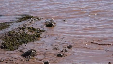 Kanada-Schlammiges-Wasser-Bei-Hopewell-Rocks