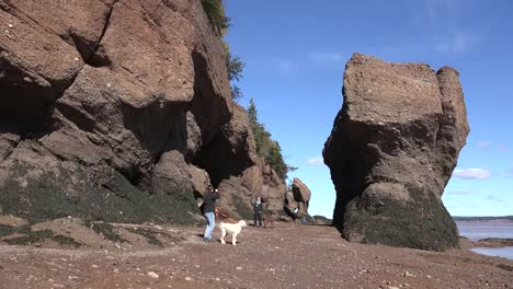 Canada-Tourists-Walk-Dogs-At-Hopewell-Rocks