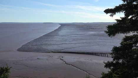 Canada-Tree-And-Mud-Flats-Along-The-Bay-Of-Fundy