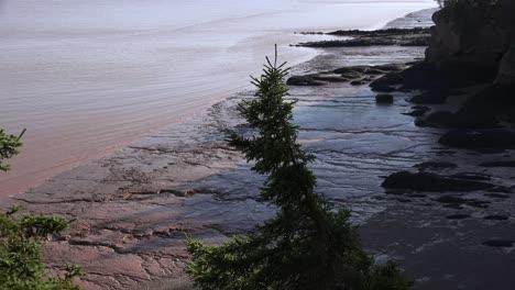 Canada-Tree-Hangs-Over-Mud-Flats-At-Hopewell-Rocks