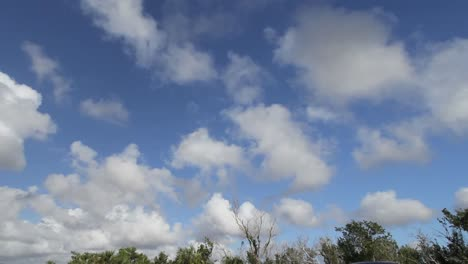 Florida-Everglades-Clouds-Above-Trees-Time-Lapse-Pan