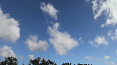 Florida-Everglades-Puffy-Clouds-Time-Lapse