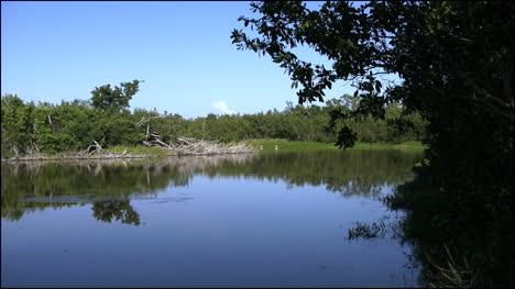 Florida-Everglades-Eco-Pond-Zooms-On-Bird