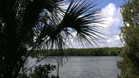 Florida-Everglades-Lake-And-Palmetto-Frond