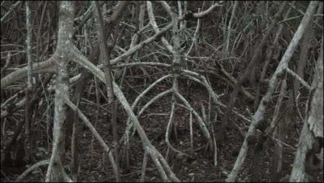 Florida-Everglades-Mangrove-Roots-In-Shadow