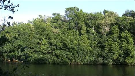 Florida-Everglades-Mangroves-Beyond-Lake