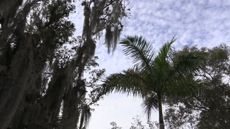 Florida-Everglades-Palm-And-Sky-Time-Lapse