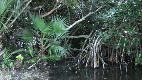 Florida-Everglades-Palmetto-And-Mangrove