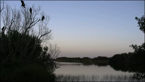 Florida-Everglades-Vultures-In-A-Tree-By-A-Lake-In-Late-Evening