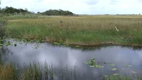 Florida-Everglades-Agua-Hierba-Y-Garceta
