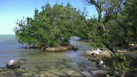 Florida-Key-Largo-Mangrove-With-Bird-Flying-By