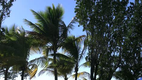 Florida-Key-Largo-Palms-En-El-Viento