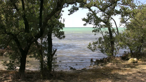 Florida-Key-Largo-Water-View-And-Trees