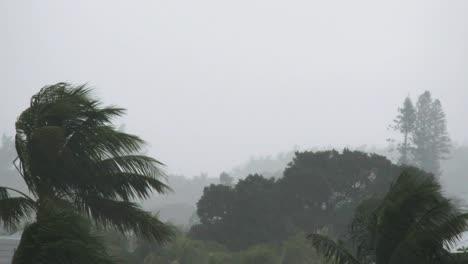 Florida-Key-West-Palm-In-Regenpfanne