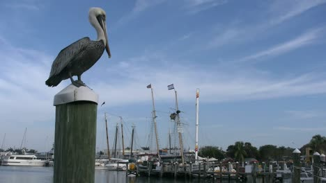 Florida-Key-West-Pelican-On-Post-Looks-Toward-Masts-And-Harbor