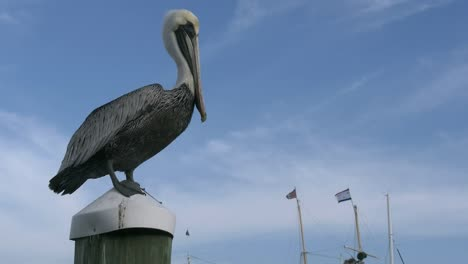 Florida-Key-West-Pelican-Perched-On-Post-Flies-Away