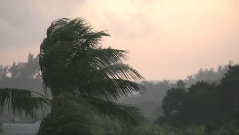 Florida-Key-West-Rain-At-Sunset-With-Palms-In-Wind