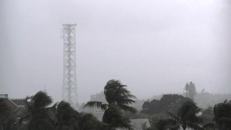 Florida-Key-West-Tower-With-Palm-In-Rain