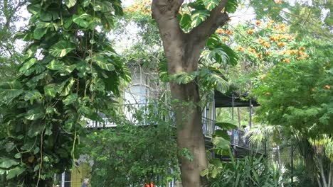 Florida-Key-West-Trees-With-Vines-By-Hemingway-House