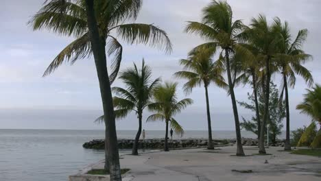 Florida-Keys-Palms-And-Sea