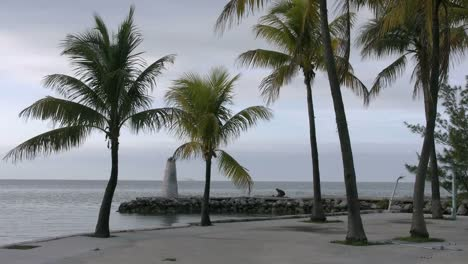 Florida-Keys-Palms-Fisherman-And-Sea
