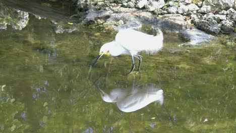 Florida-Egret-Reflected-In-Water