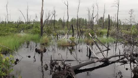 Florida-Marsh-View-Of-Dead-Trees-And-Water-Under-Grey-Clouds