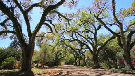 Louisiana-Rosedown-Plantation-Alley-Of-Live-Oaks